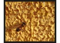 Жизнь пчёл