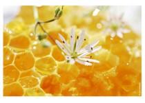 Мёд в сотах. Правильное употребление