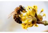 Пыльца. Важные факты