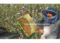 Качаем мёд, собранный с расторопши